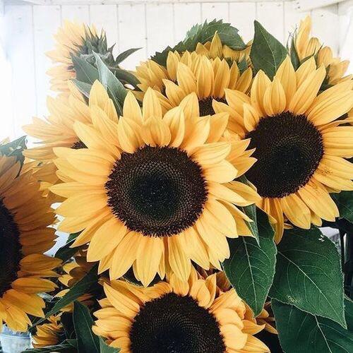 27. Grow Sunflowers